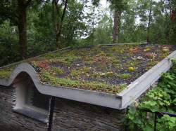 Green Roofs. Shed Roofing