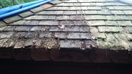 shed_repair