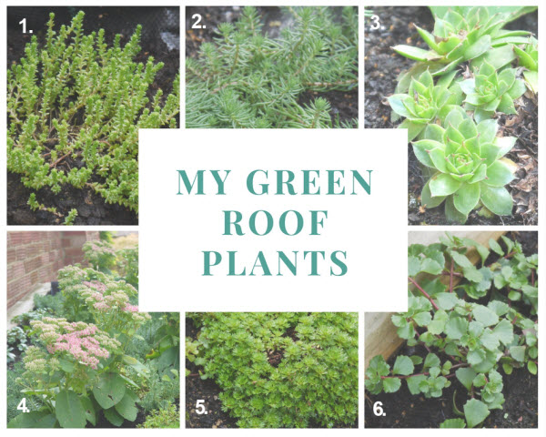 green shed roof plants